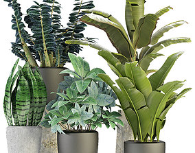 3D Collections Plants 3