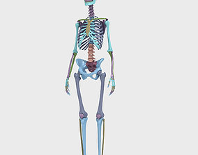 Plastic skeleton 3D