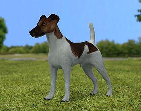 3D model Fox Terrier