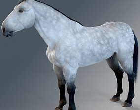 Horse - Dapple Gray Warmblood 3D