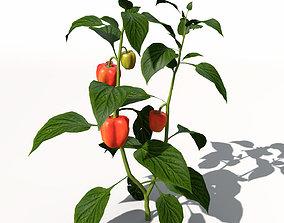3D model Chili Pepper