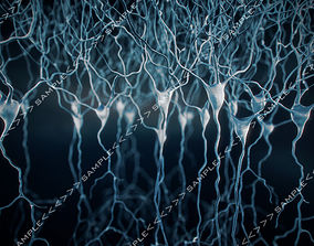 3D model Pyramidal-Neurons set