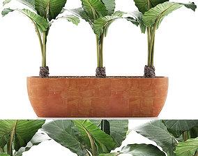 Plants Collection 70 3D