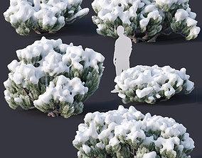 sylvestris Pinus mugo Nr3 H70-180 cm 3D