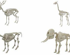 Animal Skeleton Collection 3D model