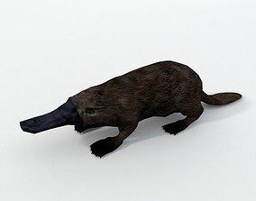 Platypus 3D asset