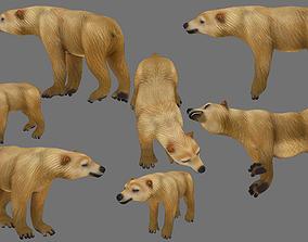3D asset rigged polar bear