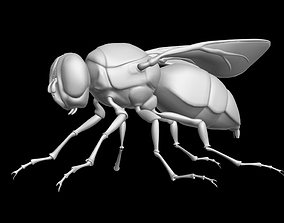 game-ready 3DS MAX FLY INSECT MODEL