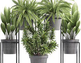 exotic 3D Collection of Exotic Plants
