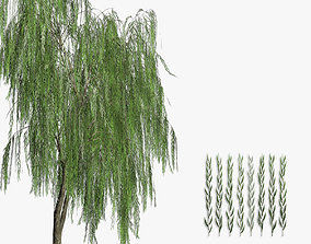 Willow tree 3D model realtime