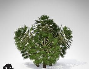 XfrogPlants Mediterranean Fan Palm 3D model