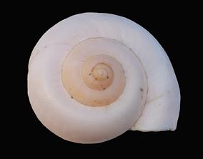 3D model Ivory Snail Shell