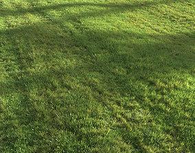 3D Summer grass