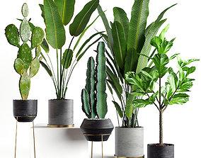 3D Collection plants 05