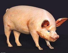 pig lowpoly 3D model