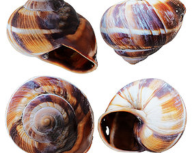 Empty Shell Snail 3D