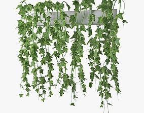 3D model ivy in pot 03