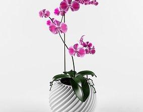 orchids 3D