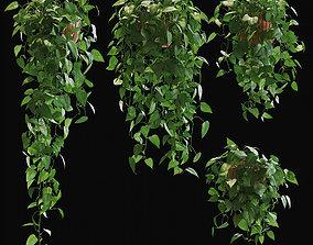 3D model Scandens plant 5