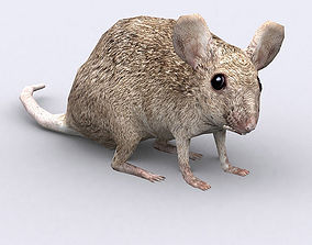 3DRT - Mouse animated