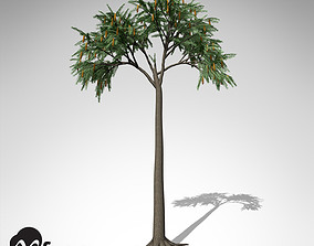 3D model XfrogPlants Lepidodendron