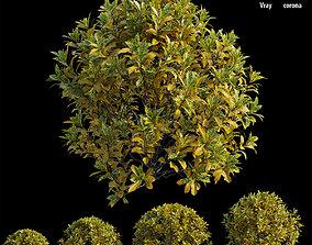 Croton plant set 13 3D