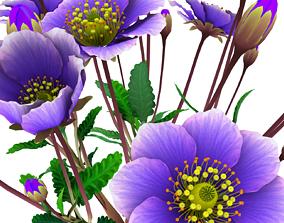 3D asset Flower Dryas Iceland