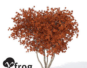 XfrogPlants Autumn Crape Myrtle 3D model