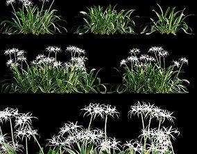 3D Hymenocallis americana - Spider lily