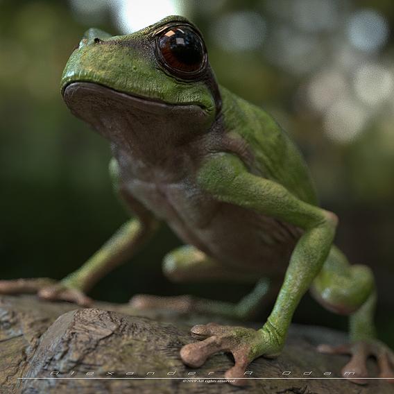 Bartholomew the Frog