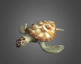 Low Poly Green Sea Turtle 3D model