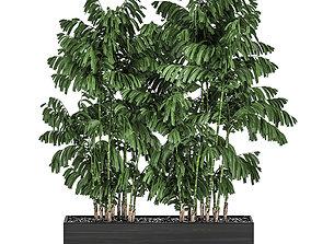 3D Decorative palm Chamaedorea in flowerpots 798