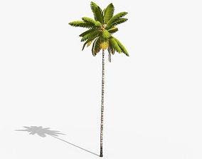 3D asset Coconut Palm Tree 8768