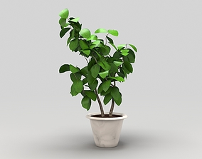 Plant 3D model low-poly houseplant