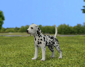 Dalmatian Puppy 3D