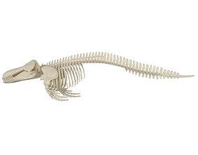 Killer Whale Orca Skeleton 3D model