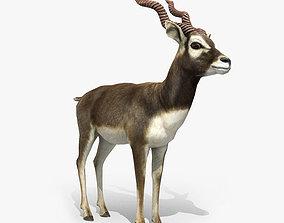 Blackbuck Antelope Low Poly 3D model