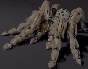 Evil white spider 3D model