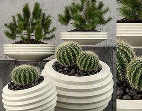 Plants collection 58 3D model