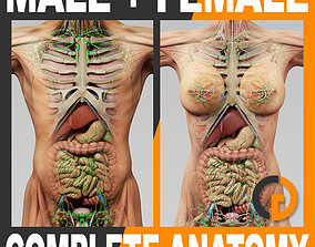 3D model Human Anatomy - Body Muscles Skeleton Internal 2