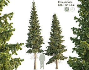 3D Siberian spruce Picea obovata 5m and 6m