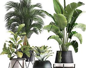3D A collection of decorative plants in pots for home 441
