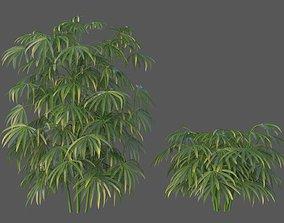 3D XfrogPlants Bamboo Palm - Rhapis Excelsa