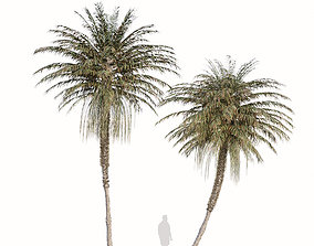 Set of Coconut Palm or Cocos nucifera Trees - 2 Trees 3D