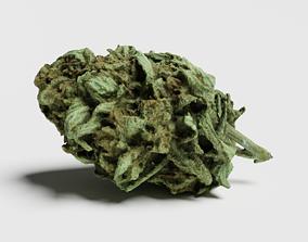 Cannabis Bud 07 3D