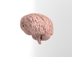 3D asset Low-Poly Brain Model