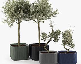 3D Urbilis Olive
