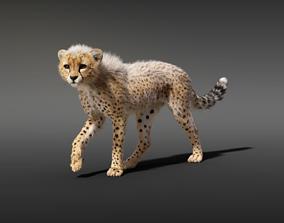 3D Cheetah Young