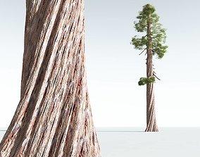 EVERYPlant Coastal Redwood 10 --12 Models--
