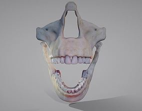 3D asset Oro-Facial anatomy Animated